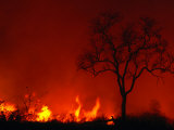 Veld Fire, Kruger National Park, Mpumalanga, South Africa Photographic Print by Carol Polich