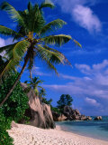 Palm Tree on Beach, Anse Source D'Argent, Seychelles Fotografisk tryk af Ralph Lee Hopkins