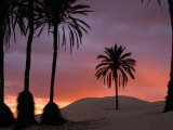 Palm Trees and Sand Dunes at Dawn, Douz, Tunisia, Photographic Print
