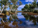 Creek Lined with River Red Gum Near Hermannsaburg, Northern Territory, Australia Fotografie-Druck von Ross Barnett