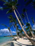 Palm Tree Lined Beach, La Romana, La Romana, Dominican Republic Photographic Print by Greg Johnston