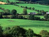 The Fields and Farmhouses of County Cork, Ireland Fotoprint van Doug McKinlay