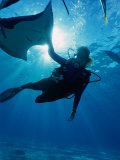 Diving at Stingray City on Grand Cayman, Grand Cayman, Grand Cayman, Cayman Islands Photographie par Greg Johnston