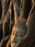 Buddha Head Inbedded in Roots at Wat Phra Mahathat, Ayuthaya, Thailand Fotoprint van Anders Blomqvist