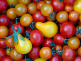 Tomatoes from Ballymaloe Cooking School, Shanagarry, Ireland Photographic Print by Oliver Strewe