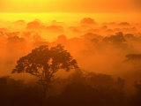 Morning Mist Over the Tambopata Candamo National Park, Amazonas, Peru Photographic Print by Alfredo Maiquez