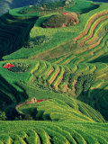 Landscape of Rice Terraces with Red Peppers Drying in Long Ji, Guangxi, China Photographic Print by Keren Su