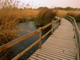 Raised Walkway Through Marshlands, Azraq Wetlands Reserve, Amman, Jordan, Photographic Print