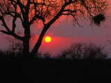 African Sunset, Kruger National Park, Kruger National Park, Mpumalanga, South Africa Photographic Print by Carol Polich
