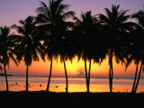 Palm Trees at Sunset, Cook Islands Photographic Print by Peter Hendrie