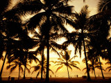 Palms in Evening on Kovalam Beach, Kovalam, Kerala, India Photographic Print by Greg Elms