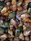 Whelks on Sale at a Seafood Market, Treguier, Brittany, France Photographic Print by Jean-Bernard Carillet
