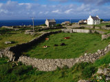 Farm at Inishmore, Ireland Photographic Print by Wayne Walton