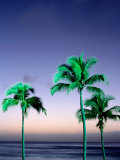 Palms at Dusk, Poipu, USA Photographic Print by Holger Leue