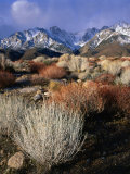 Mountains and Desert Flora in the Owens Valley, Inyo National Forest, California, USA Fotografisk tryk af Wes Walker