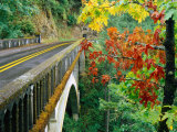 Trees in Autumn Beside Bridge Over Columbia River Gorge, Columbia, Oregon, USA Photographic Print by Richard Cummins