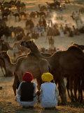Boys and Camels at Pushkar Camel Fair, Pushkar, Rajasthan, India Photographic Print by Stephen Saks
