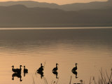 Waterfowl on the Lake Silhouetted at Dawn, Lake Baringo, Rift Valley, Kenya Photographic Print by Anders Blomqvist