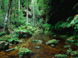 Forêt ombrophile tempérée à Greaves Creek, Attrait de la randonnée du Grand Canyon, PN Blue Mountains NP, Australie Photographie par Ross Barnett