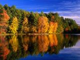 Autumn Trees in New Hampshire, New Hampshire, USA 写真プリント : キャロル・ポリッシュ