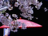 Red Umbrella and Cherry Blossoms, Kyoto, Japan Photographic Print by Frank Carter