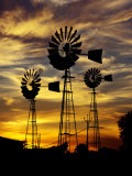 Windmills at Sunset in Penong, Australia Photographic Print by Richard I'Anson