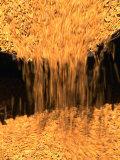 Chinese Rice Harvest, Beijing, China Photographic Print by Keren Su