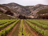 Vineyard and Typical Alpilles Landscape Near Mausanne, Provence-Alpes-Cote d'Azur, France 写真プリント : ダイアナ・メイフィールド