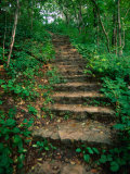 Hiking Trail Through Whitewater State Park,Whitewater State Park, Minnesota, USA Photographic Print by John Elk III