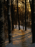 Snow-Covered Trees in Forest, Early Evening, Lithuania Photographic Print by Jonathan Smith