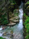 Overhead of Sunrift Gorge, Glacier National Park, USA Photographic Print by Carol Polich