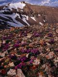Mt. Lincoln, Colorado, USA Photographic Print by Karl Lehmann