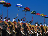 Men Riding Decorated Elephants at Annual Pooram Festival, Thrissur, India Photographic Print by Paul Beinssen