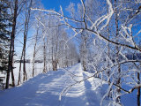 Snow on Country Lane, Liminka, Finland Photographic Print by David Tipling