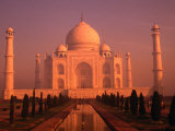 Taj Mahal Glows at Sunrise, Agra, Uttar Pradesh, India Fotografiskt tryck av Dallas Stribley