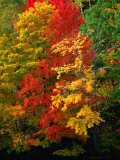 Autumn Colours in Marquette County, USA Photographic Print by Charles Cook