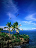 Birds Flying Over Palm Trees at Swan Key, Bocas Del Toro Islands, Panama Photographic Print by Alfredo Maiquez