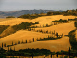 Golfen Tuscan Landscape Near La Foce, Tuscany, Italy Photographic Print by Diana Mayfield