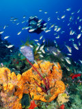 Diving at Barry's Dream Site, Near Mero, Mero, Dominica Photographic Print by Michael Lawrence