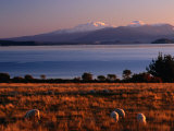 Lake Taupo in Tongariro National Park, New Zealand Photographic Print by David Wall
