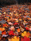 Fall Leaves Create a Patchwork of Colours, Great Smoky Mountains National Park, Tennessee, USA Photographic Print by Rob Blakers