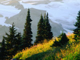 The Skyline Trail in Mt. Rainier National Park, Washington, USA Photographic Print by Richard Cummins