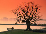 Bare Tree and Boat on Edge of Taungthaman Lake at Sunrise, Amarapura, Mandalay, Myanmar (Burma) Photographic Print by Anders Blomqvist