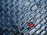 A Single Red Maple Leaf on a Steel Manhole Cover, Kyoto, Kinki, Japan, Photographic Print by Frank Carter