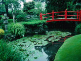 Bridge and Pond of Japanese Style Garden, Kildare, Ireland Photographic Print by Tony Wheeler