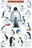 Penguins Chart Poster