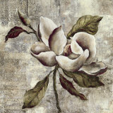 Silver Magnolia I Prints by Laurel Lehman