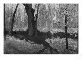 Underbrush in Spring at Barbizon, Odilon Redon Premium Giclee Print by Odilon Redon