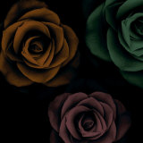 Rose Trio I Posters by Jan Lens
