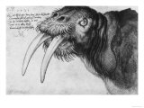 Walrus, British Museum, London Giclee Print by Albrecht Dürer